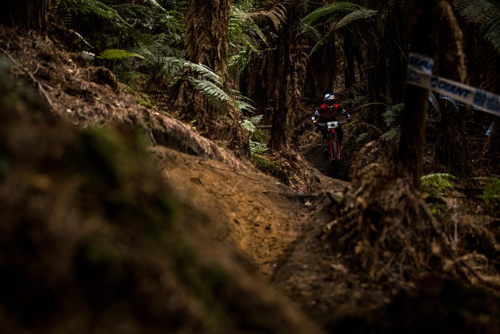 Pedro Burns - 2019 Enduro World Series Crankworx Rotorua - Mountain Biking Pictures - Vital MTB