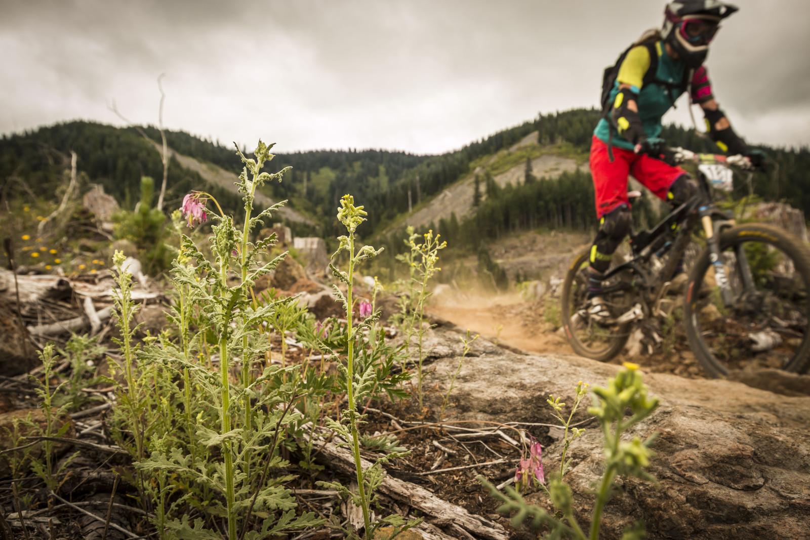 Kim Becker, 1st Place Pro Women's, Oregon Enduro, Cold Creek - 2014 Oregon Enduro, Cold Creek - Mountain Biking Pictures - Vital MTB