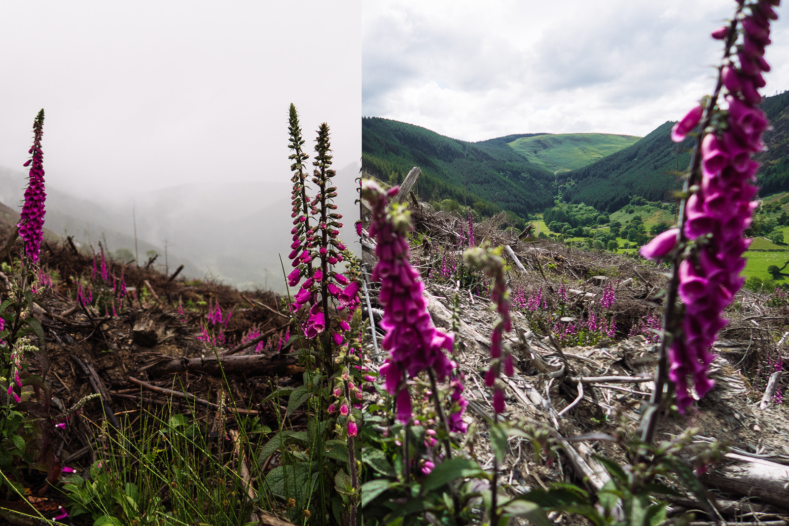 Tale of Two Views, British DH Series, Bala - RACE REPORT - 2015 British Downhill Series Bala - Mountain Biking Pictures - Vital MTB