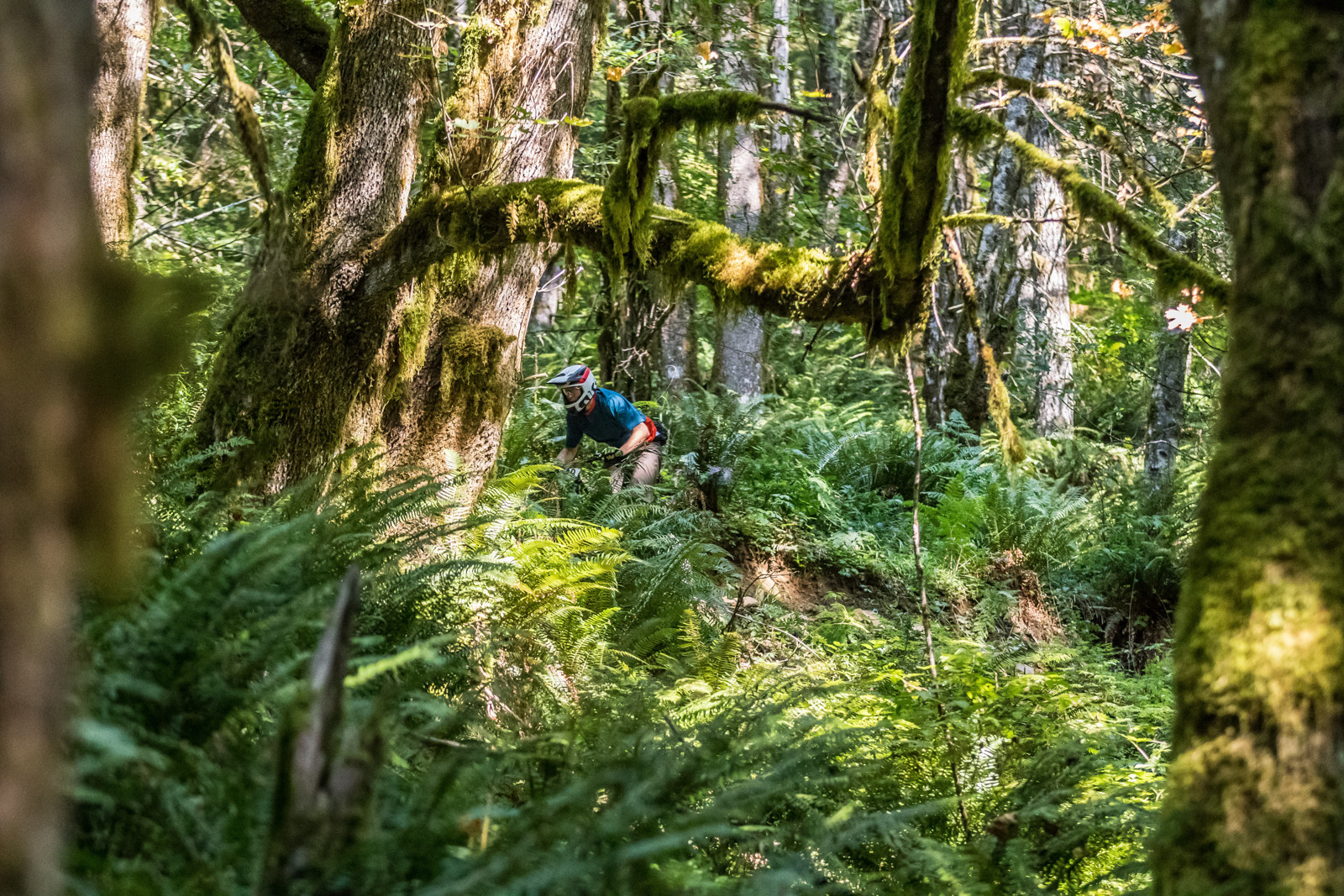 Nick Harden - 2015 Oregon Enduro Series Finals Mt. Hood - Mountain Biking Pictures - Vital MTB