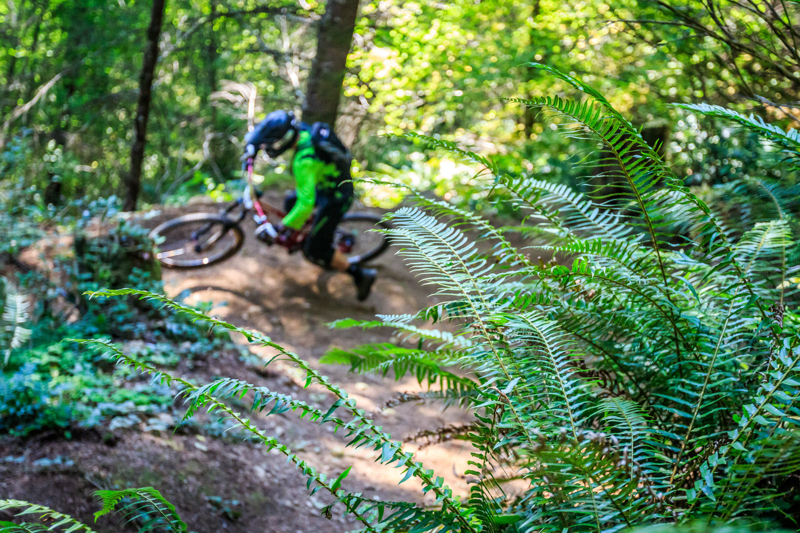 Many Ferns - 2015 Oregon Enduro Series Finals Mt. Hood - Mountain Biking Pictures - Vital MTB