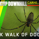 Track Walk of Doom! Cairns World Cup Downhill Course, Of Snakes, Spiders and Stinging Plants