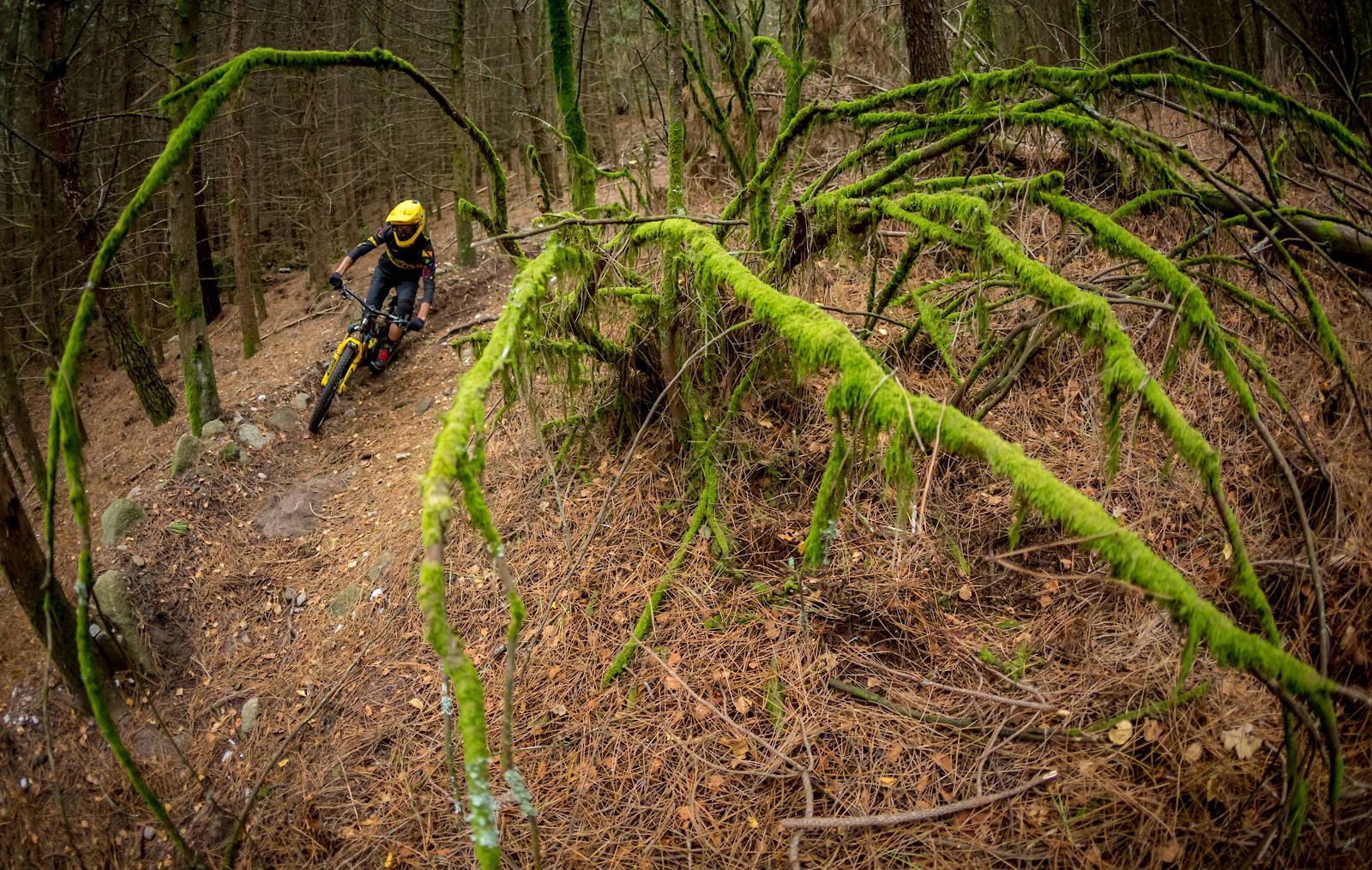 Shimano - miguelbento - Mountain Biking Pictures - Vital MTB
