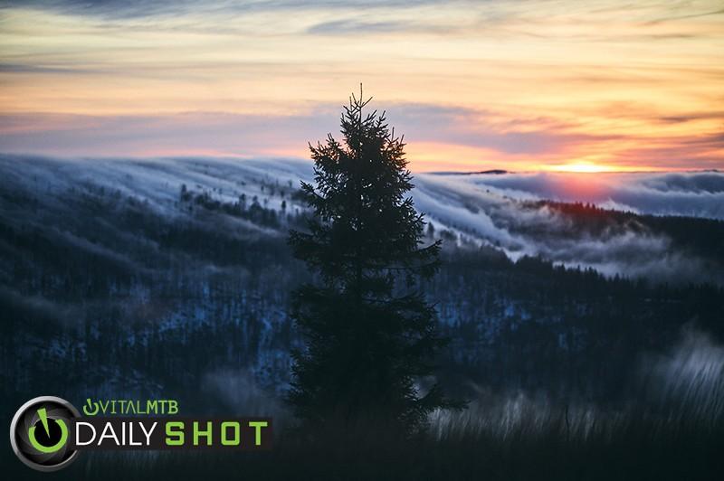 Tree - michal.gedeon - Mountain Biking Pictures - Vital MTB