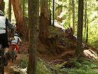 The McKenzie River Trail, Oregon