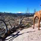 trail dogz
