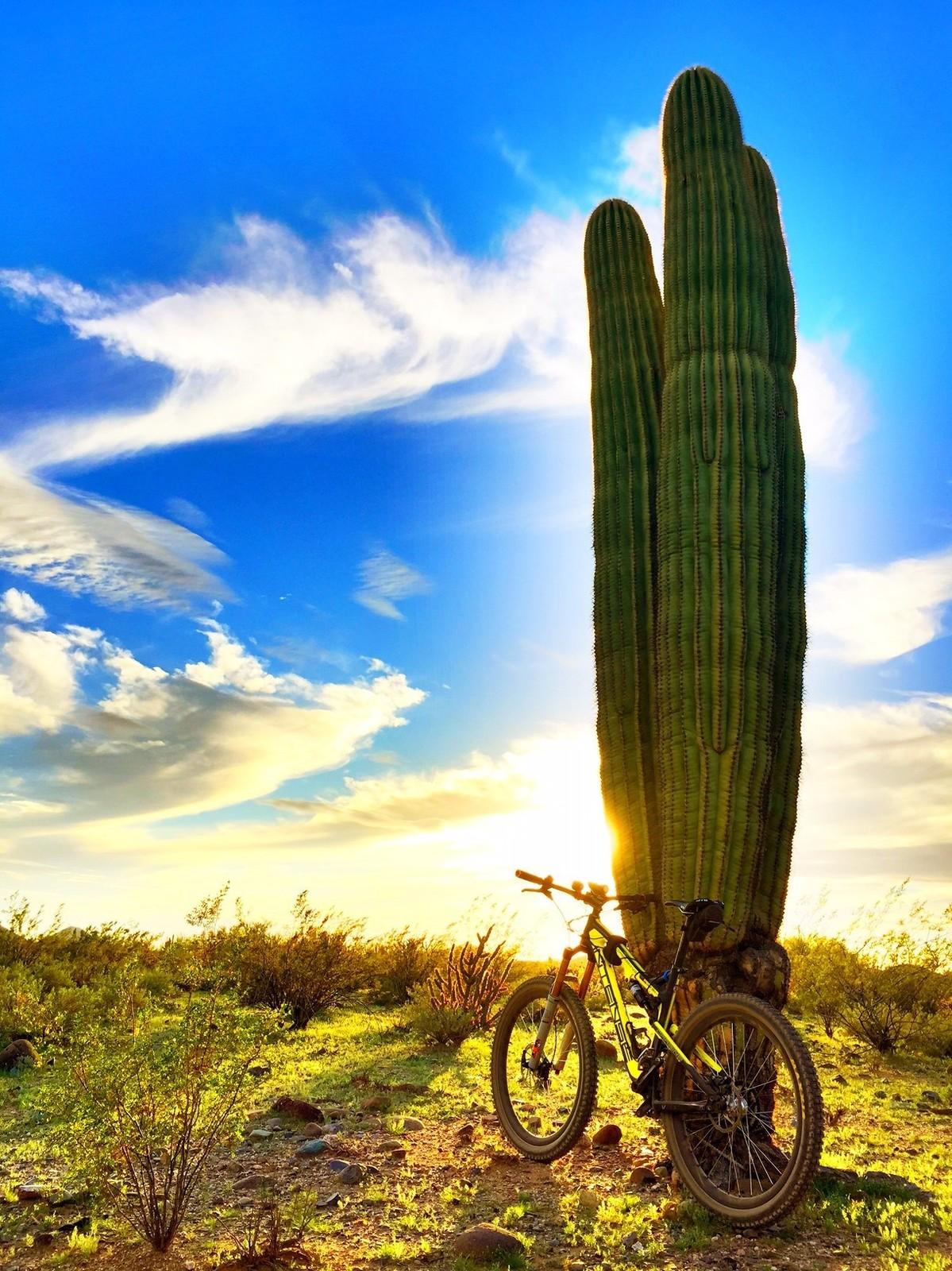 Carbine in the desert - azmtbr - Mountain Biking Pictures - Vital MTB