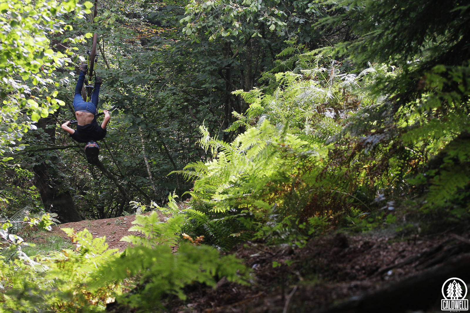 Spotting the landing in amongst the ferns - CaldwellVisuals - Mountain Biking Pictures - Vital MTB