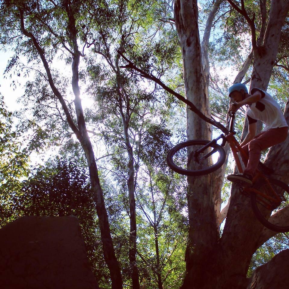 Albury Dirt Jumps - Paddymills - Mountain Biking Pictures - Vital MTB