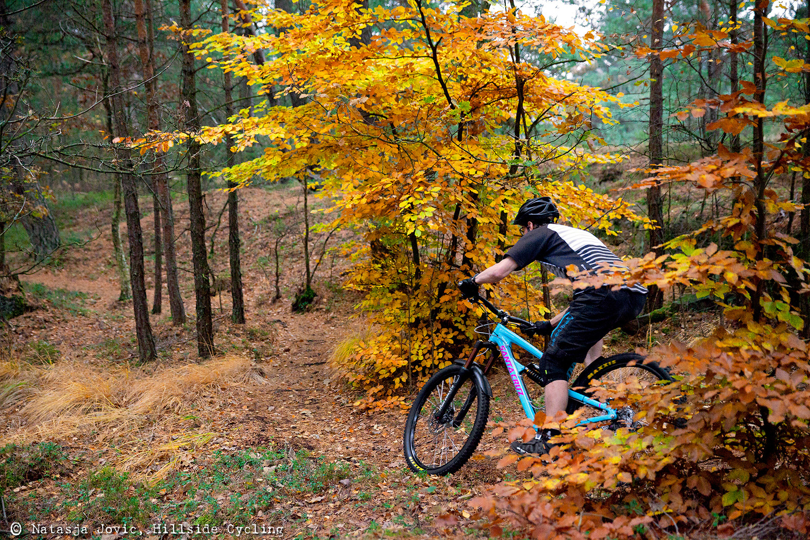 physics of a mountain bike essay