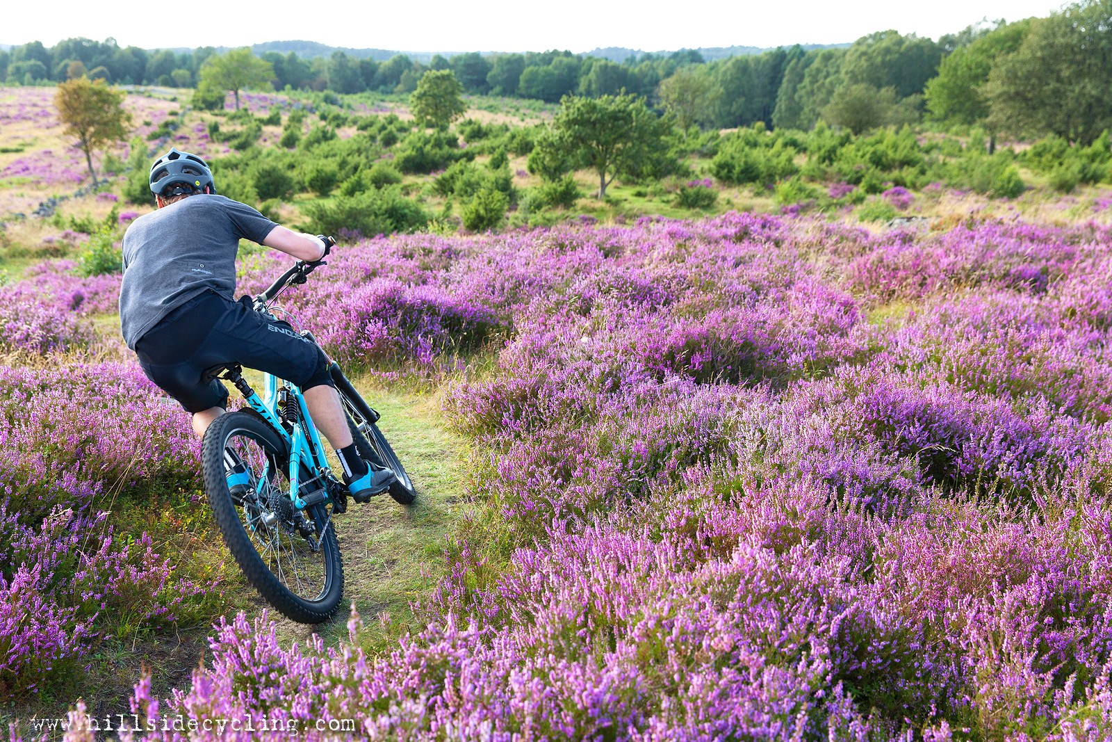 Purple Heather Fields, Gothenburg, Sweden.  - Hillside Cycling - Mountain Biking Pictures - Vital MTB