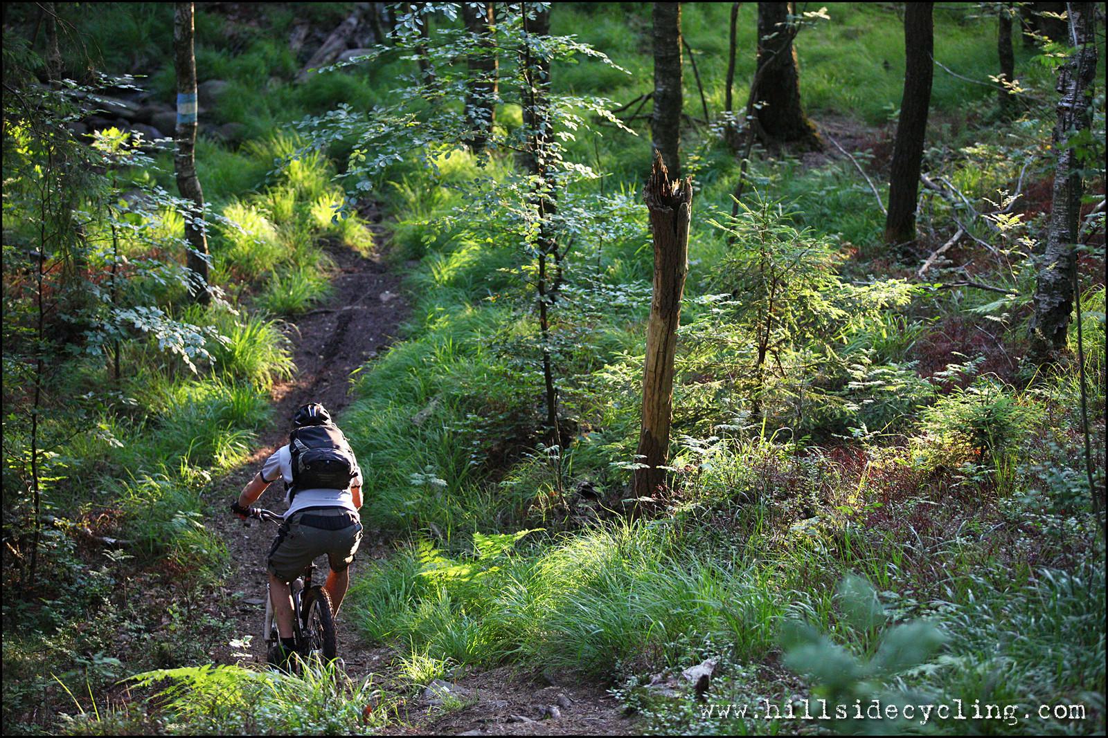 Black Beast Trail - Hillside Cycling - Mountain Biking Pictures - Vital MTB
