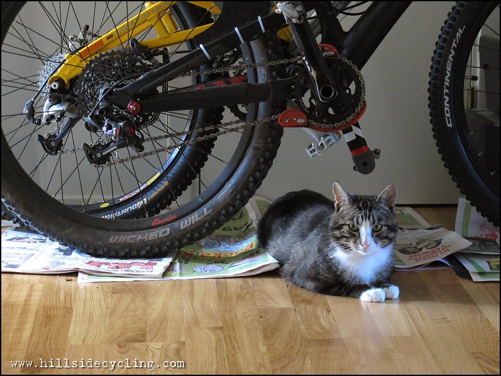 Trail Cat - Hillside Cycling - Mountain Biking Pictures - Vital MTB