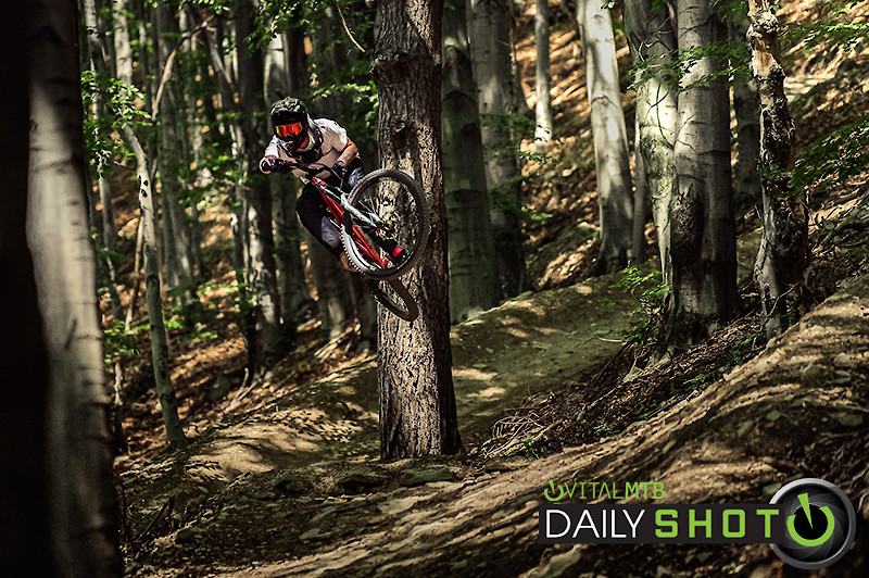 forest vibes - Banan - Mountain Biking Pictures - Vital MTB