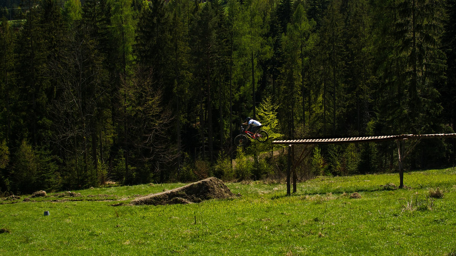 into the woods - Banan - Mountain Biking Pictures - Vital MTB