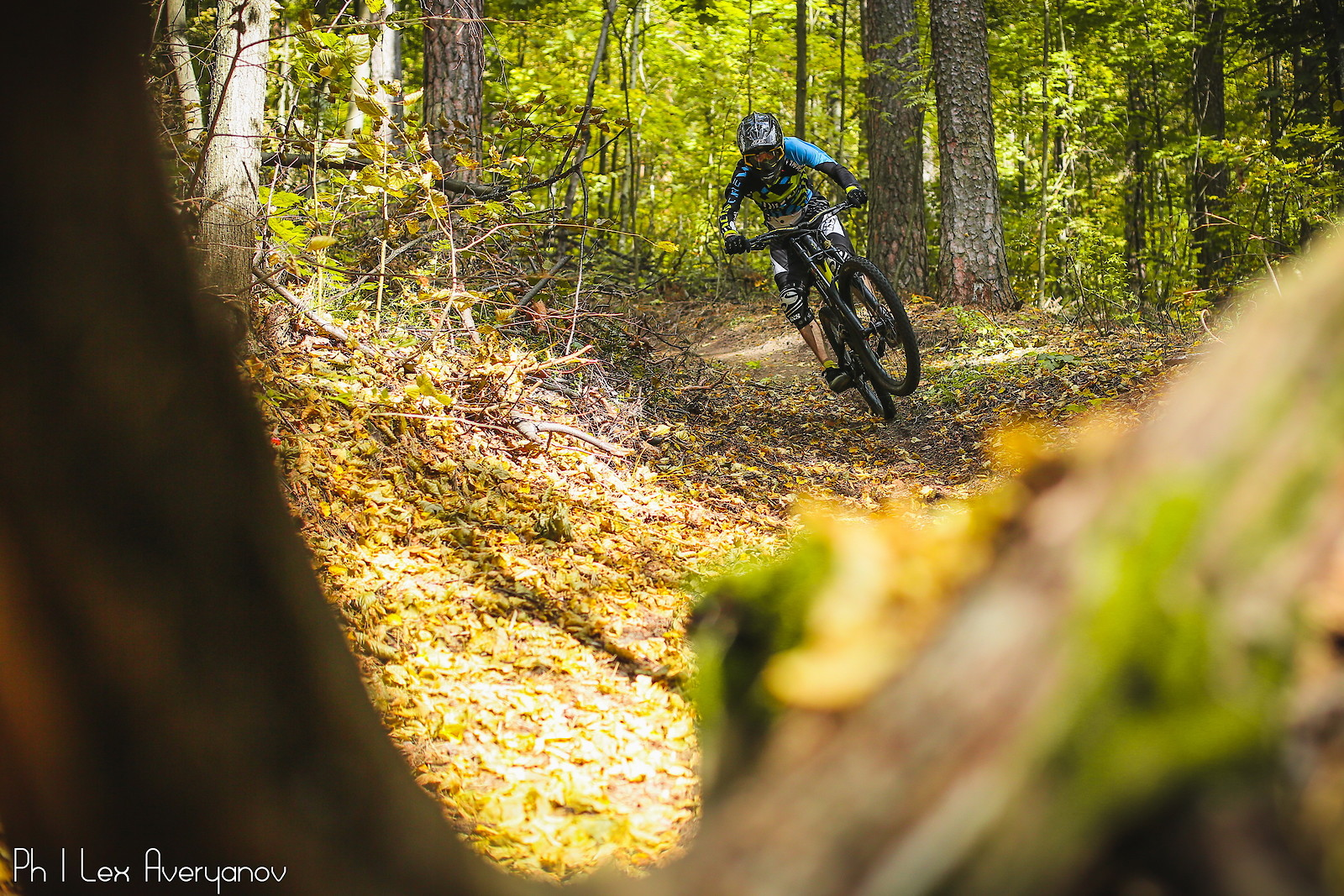 fall forest - YakuT - Mountain Biking Pictures - Vital MTB