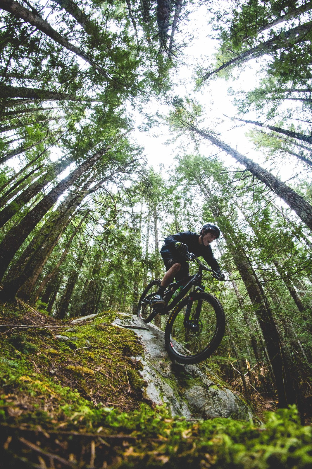 Under the trees - MaxB - Mountain Biking Pictures - Vital MTB