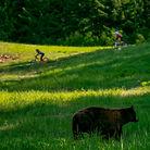 C138_bears_and_bikes