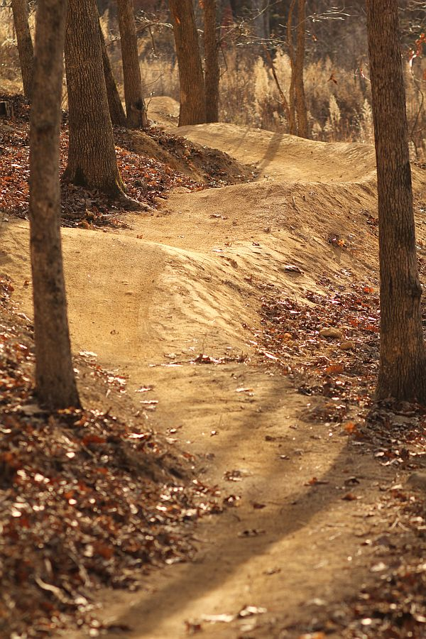 Elevated Trail Design-Briar Chapel mtb trail