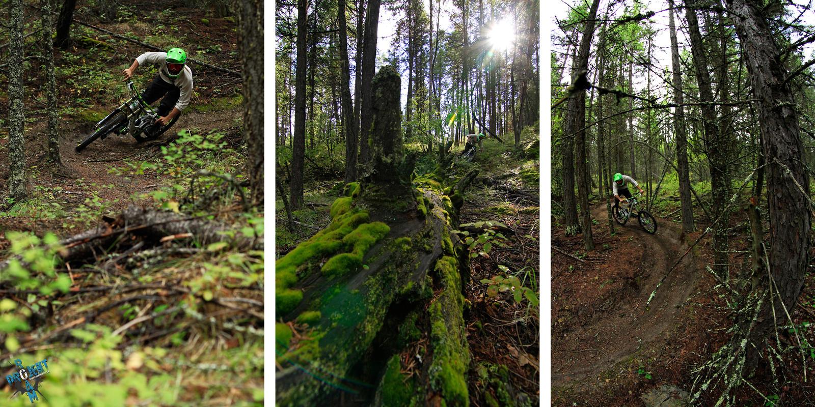 Whitefish, MT - projekt roam - Mountain Biking Pictures - Vital MTB
