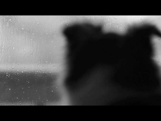 PROJEKT ROAM: Day of the Dog