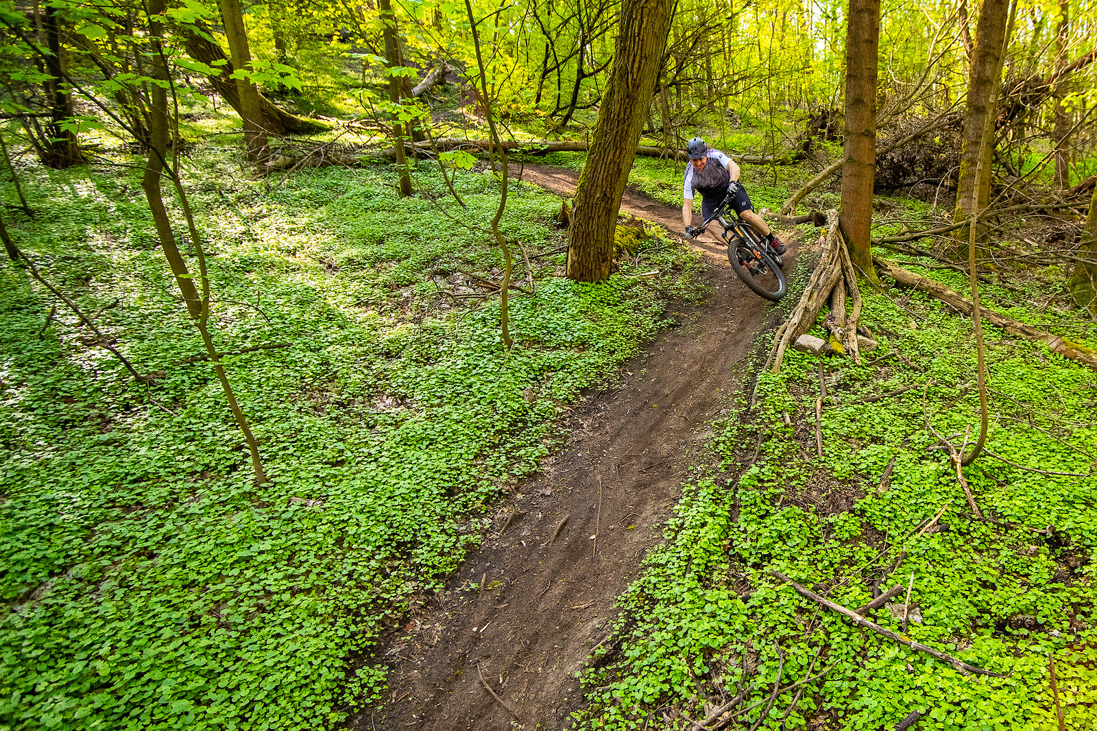 Through The Wild Garlic - Robert_Loughlin - Mountain Biking Pictures - Vital MTB