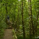 another trail around the corner