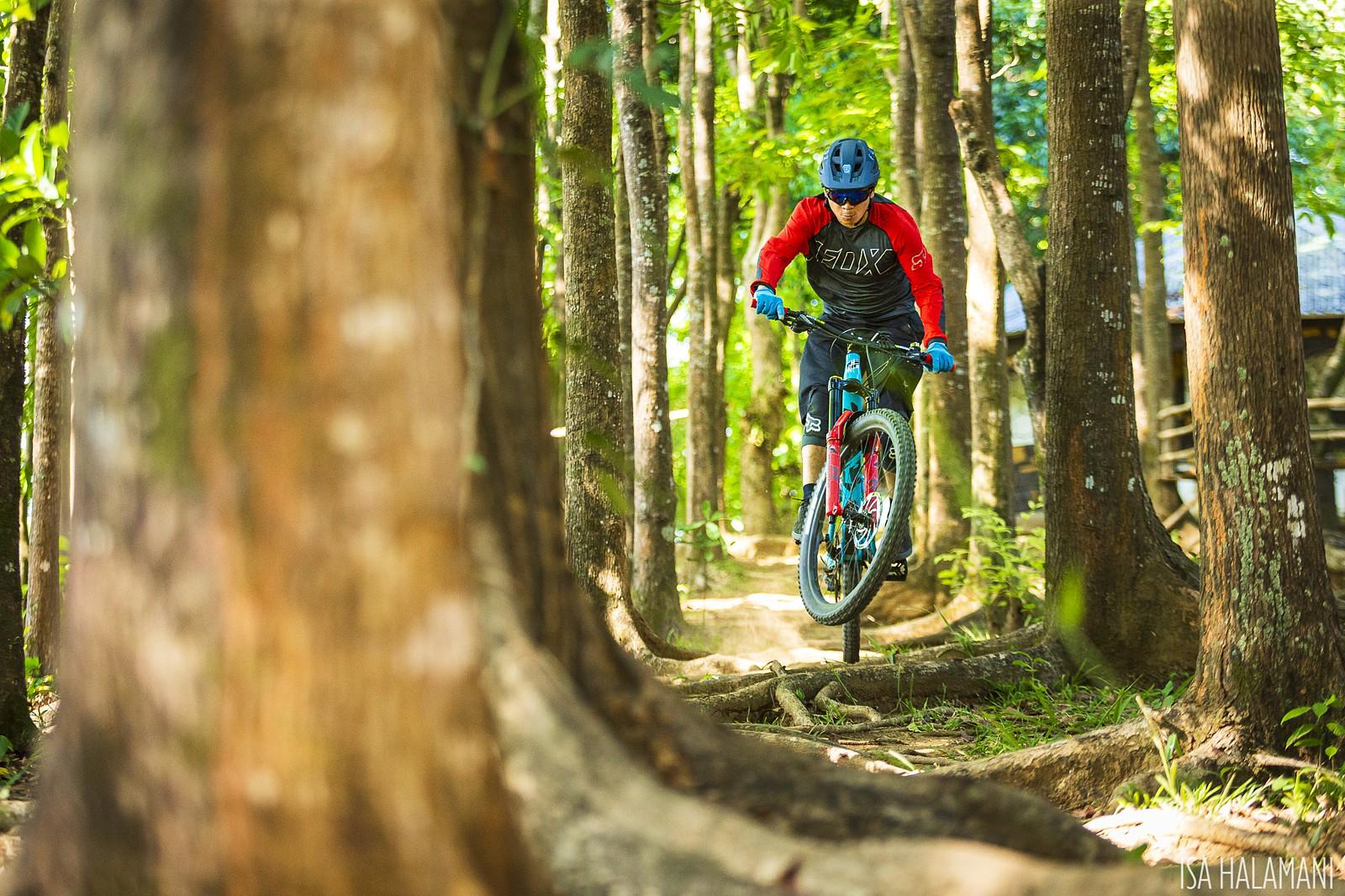 Roots at Corterra - imhalamani - Mountain Biking Pictures - Vital MTB