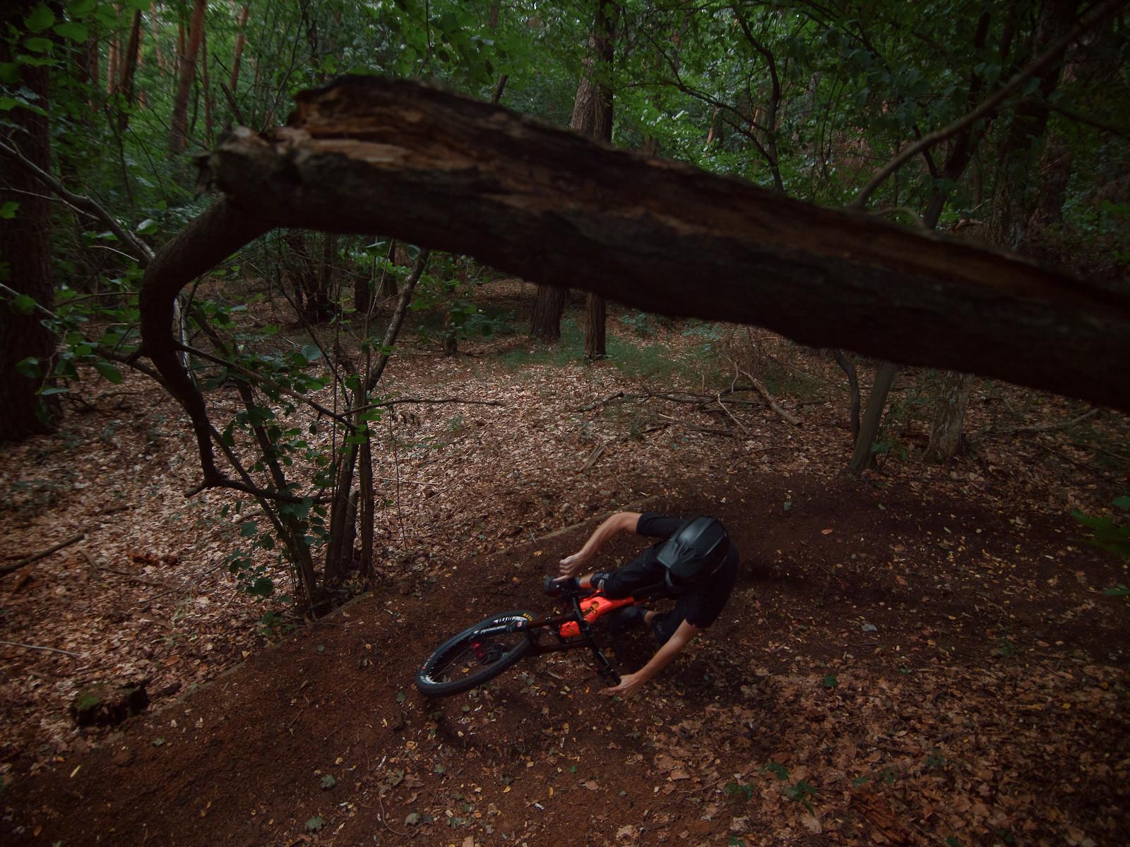 Under the tree - EWIA - Mountain Biking Pictures - Vital MTB