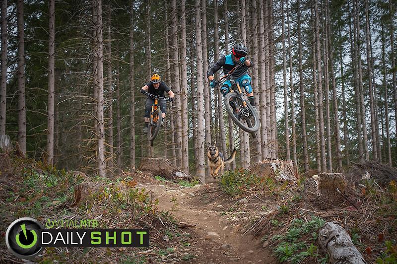 Dog Days - Hollywood Gainey - Mountain Biking Pictures - Vital MTB