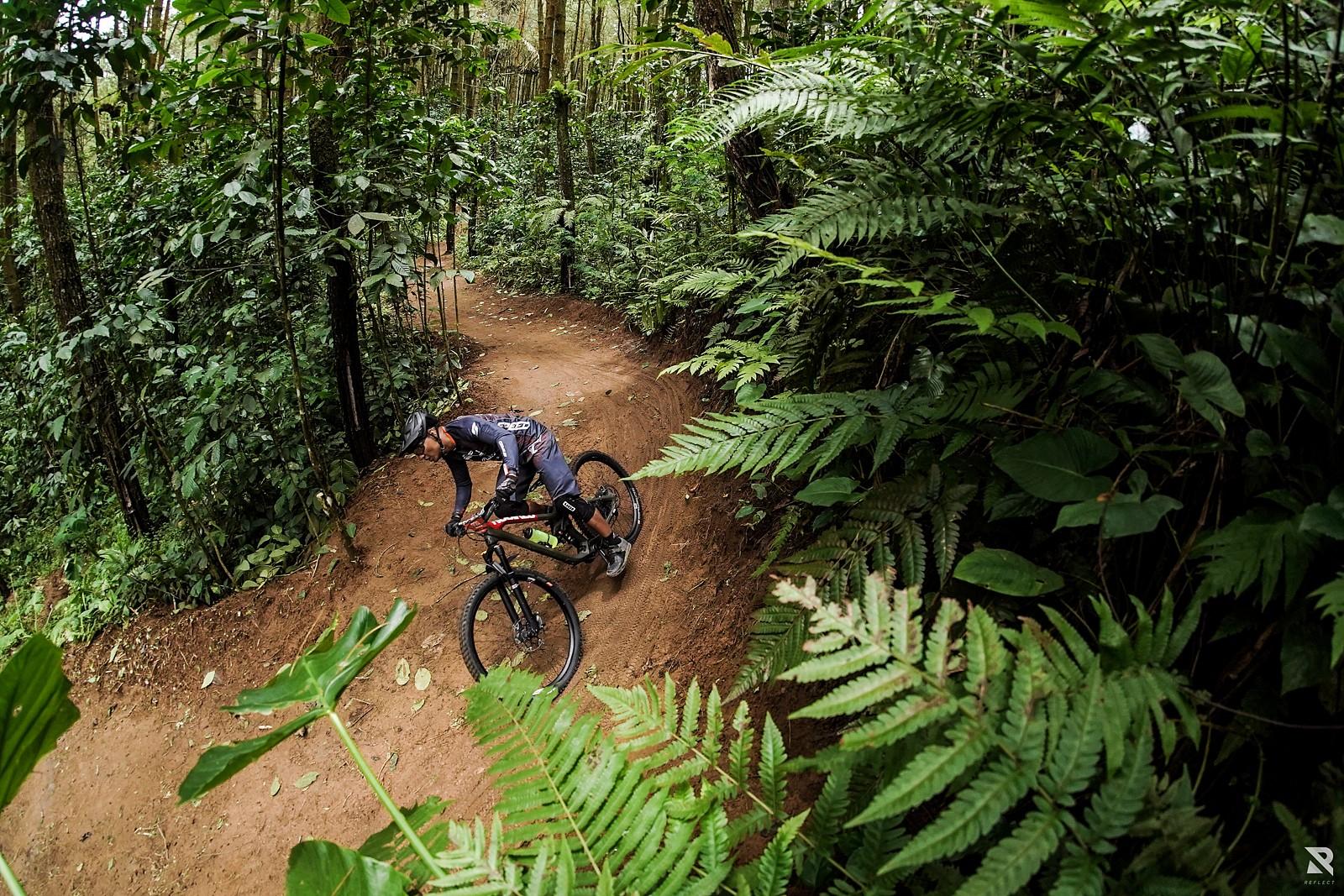 Into the woods - RezaAkhmad - Mountain Biking Pictures - Vital MTB