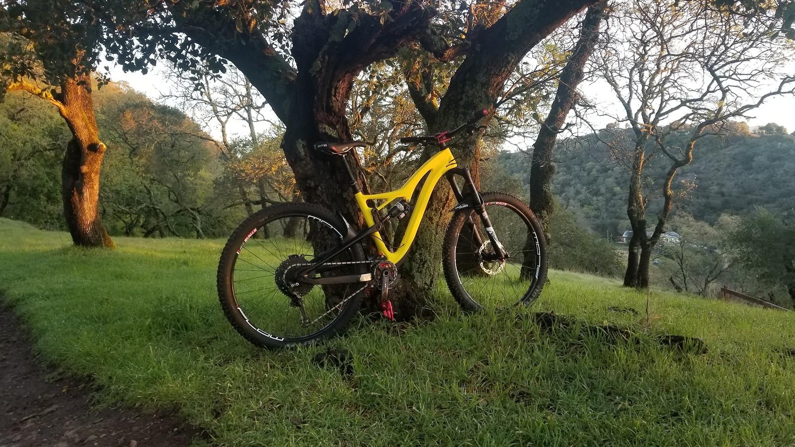 Yellow jacket bike build