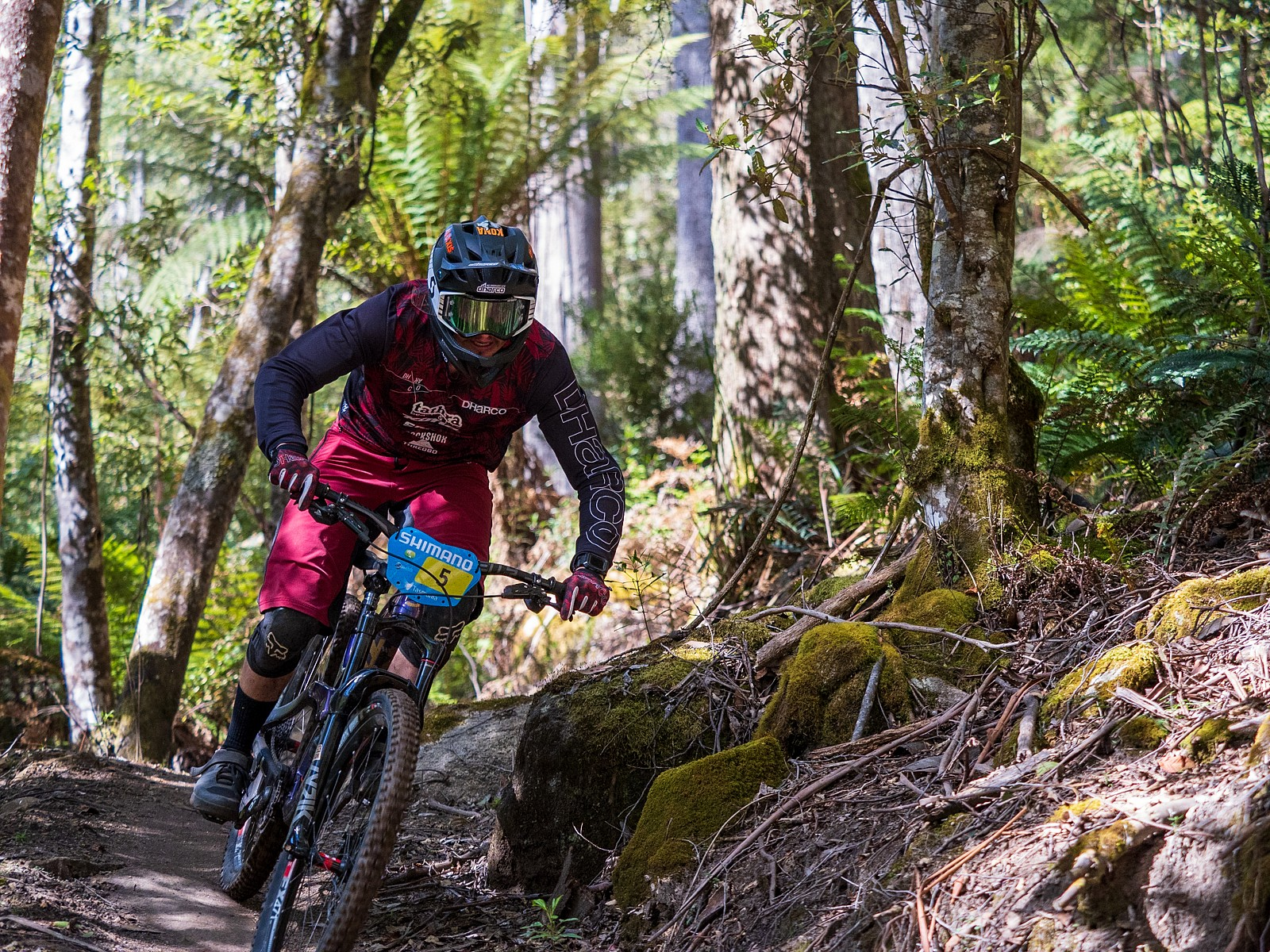 171119-Tassie-0458 - jack.fletcher86 - Mountain Biking Pictures - Vital MTB