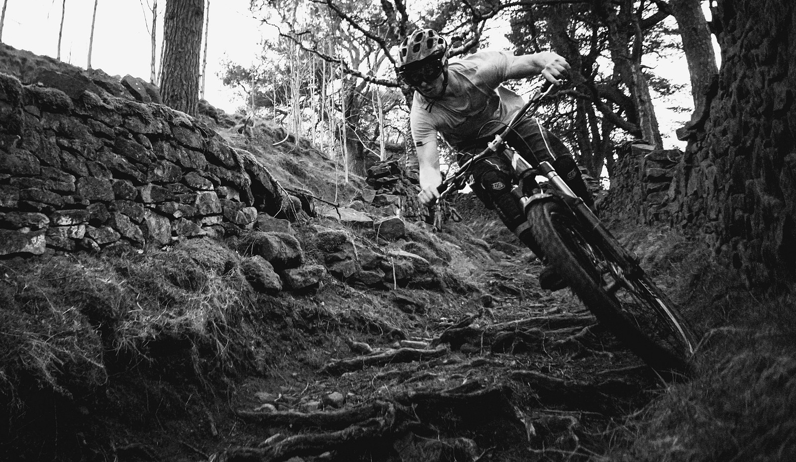 DSC09380 (2) - Mushrum - Mountain Biking Pictures - Vital MTB