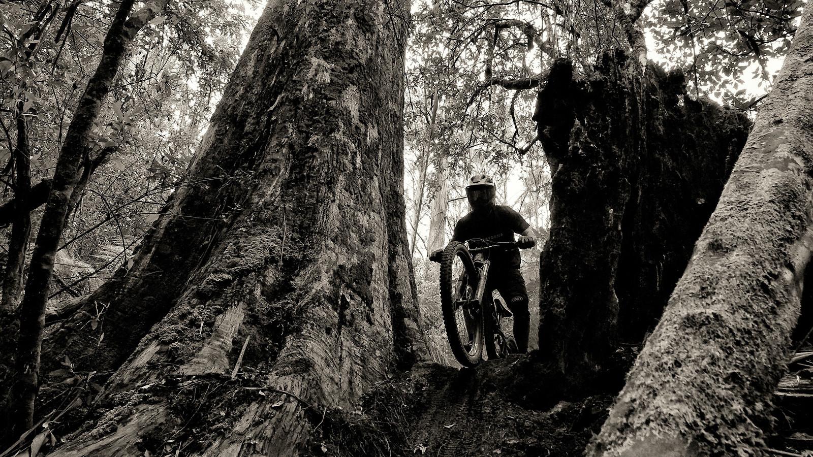 Dropping in to Prehistoric forest, Maydena Bike Park Tasmania - digitalhippie - Mountain Biking Pictures - Vital MTB