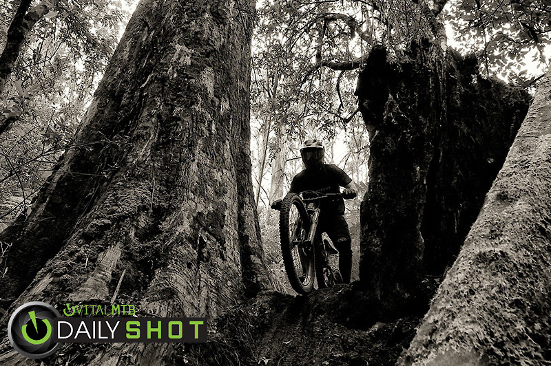Dropping Into Prehistoric Forest, Maydena Bike Park Tasmania - digitalhippie - Mountain Biking Pictures - Vital MTB