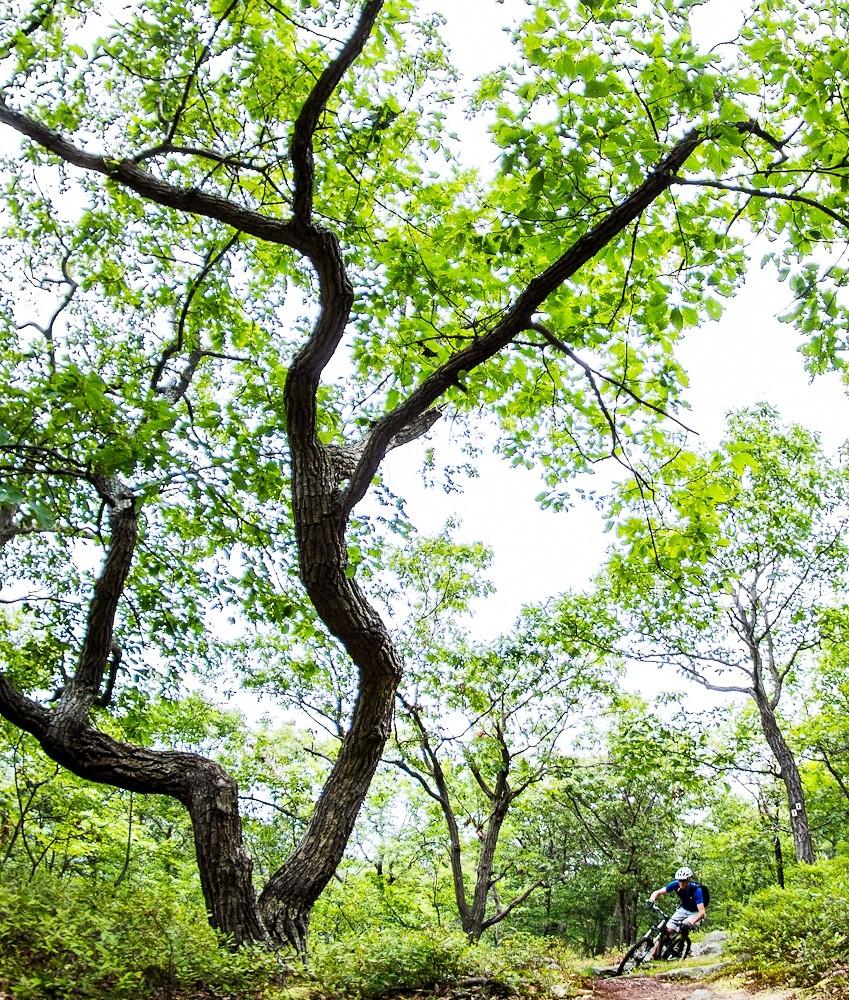 The Tree x2 - jparker - Mountain Biking Pictures - Vital MTB