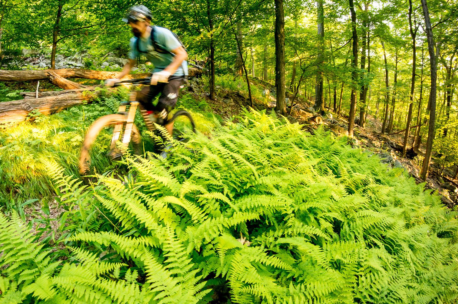 Ferns - jparker - Mountain Biking Pictures - Vital MTB