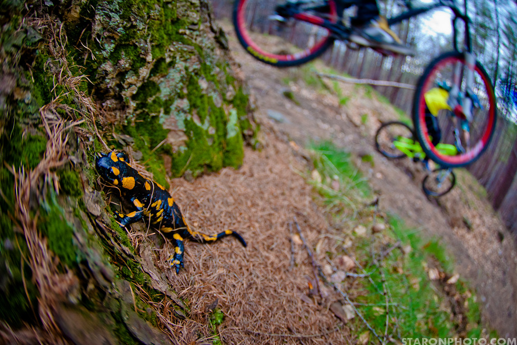 salamandra  - Piotr_Staroń - Mountain Biking Pictures - Vital MTB