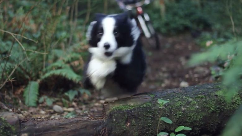 Impossible To Keep Up with the World's Fastest Trail Dog