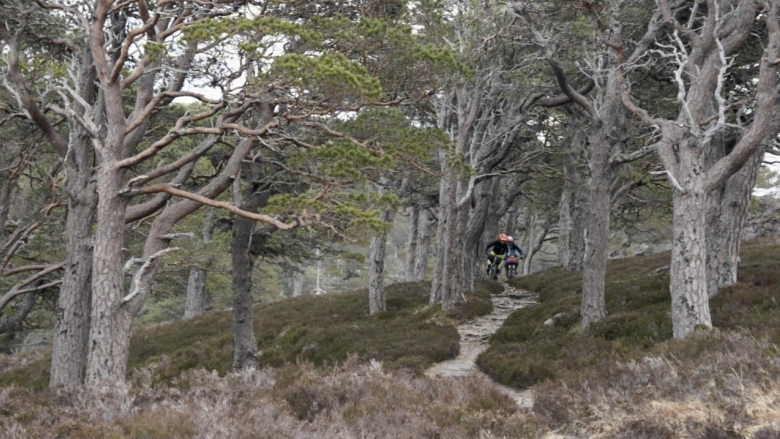In Search of Peaty