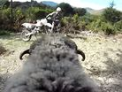 RAMCAM: Angry Ram vs Rider - He's Back & Angrier Than Ever!