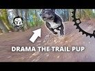 The Worst Trail Dog in the World