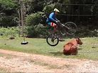 Mountain Bikers vs. Animals, Who Did It Best?